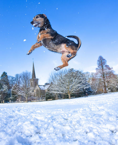 Dog Jumping Over Snow Against Sky