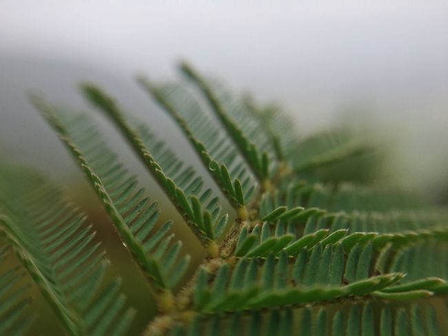 Green Color Close-up No People Leaf Nature Selective Focus Plant Growth Freshness Beauty In Nature Day Fern Frond Outdoors