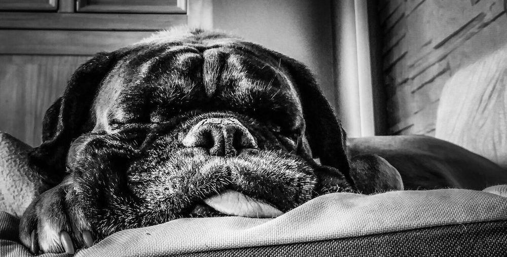 Pet Portraits I'm still sleeping, Mom🐕, Ich schlafe noch, Mama🐕 Close-up Boxer Dogs Boxerdog Dogphotography Dogportrait Dogportraiture Dog Love Dogsleeping Dogsleeps Animal Themes Animal_collection Doglovers DogLover❤💓💜🐾 Doglover Dogphotos Dogphotographer Dogphotografy Dog Photography Dog Portrait Dog❤ Boxer Dreams💕Bestfriends Bestfriend Vierpfoten