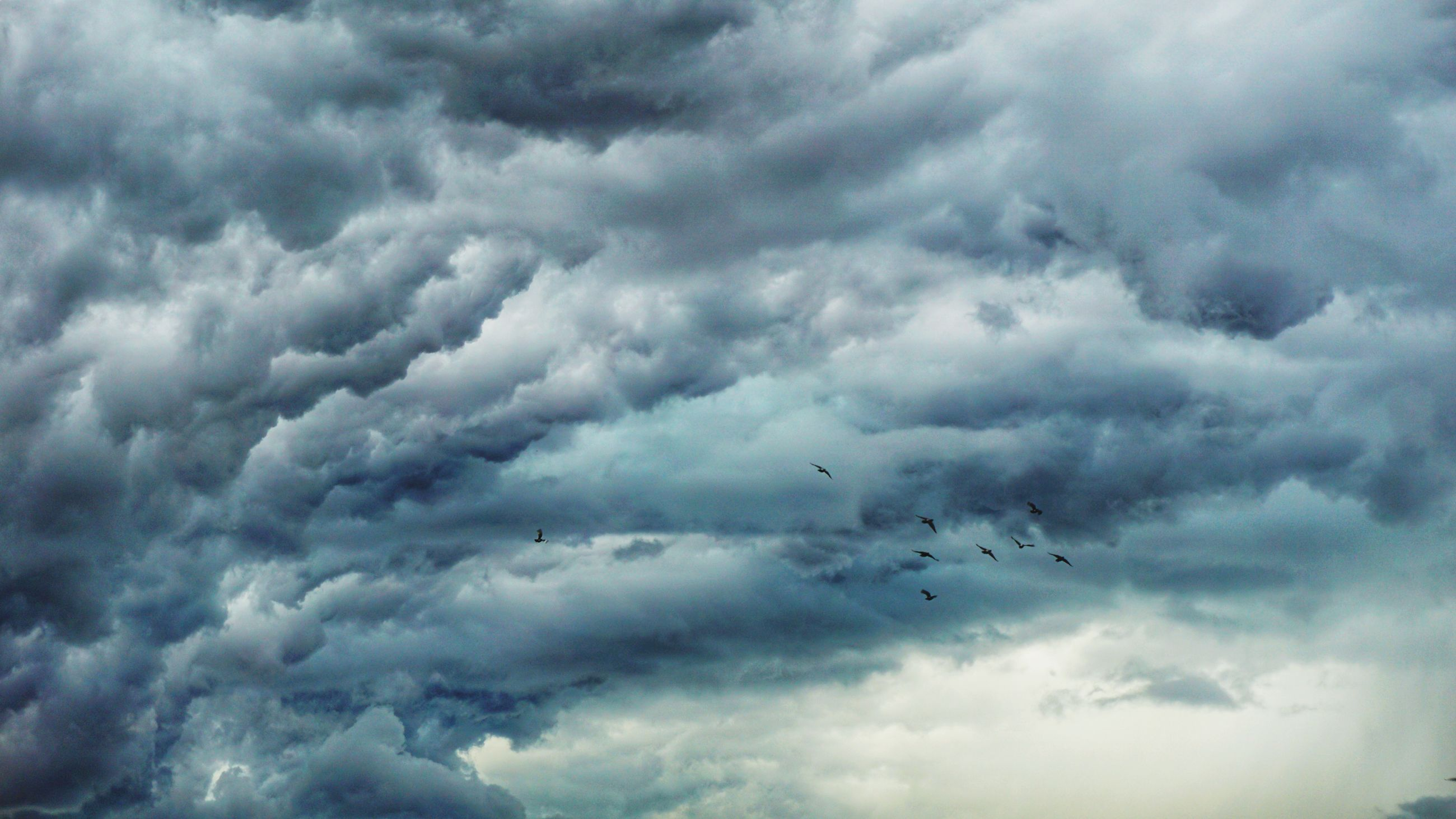 cloud - sky, sky, flying, beauty in nature, low angle view, animal, vertebrate, bird, nature, animal themes, overcast, group of animals, storm, no people, animals in the wild, animal wildlife, scenics - nature, day, storm cloud, outdoors, plane, flock of birds, ominous