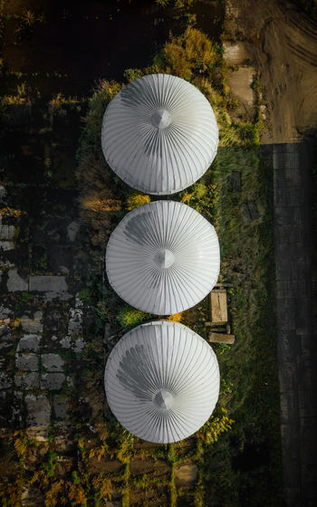High angle view of umbrella on plant
