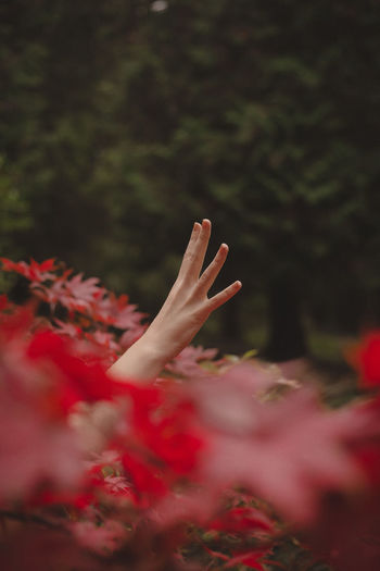 Cropped hand of woman amidst plants