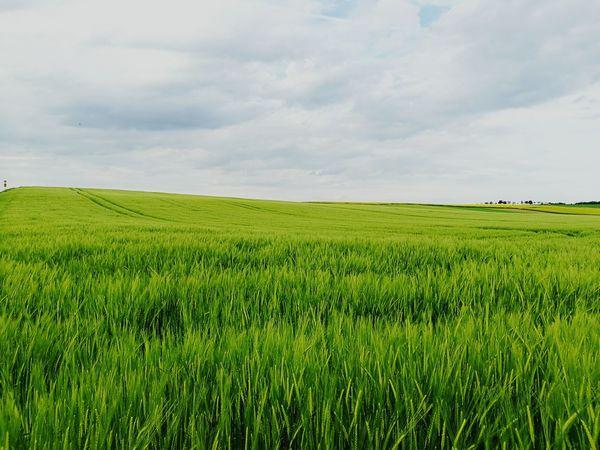 Landscape Field Landside Plants Nature Outdoors Spring Farming Grass Green