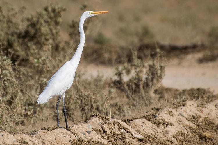 Crane bird on field