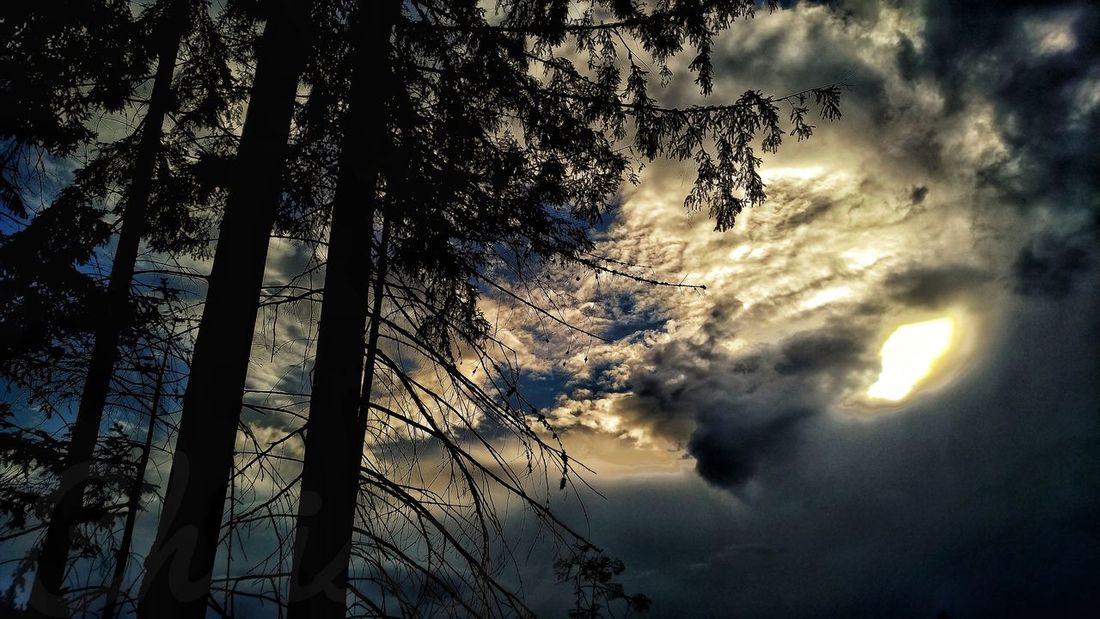Tree Sunset Silhouette Sky Cloud - Sky Storm Cloud Dramatic Sky Moody Sky Cloudscape Atmospheric Mood Cumulus Cloud Stratosphere Sky Only Storm Cumulonimbus Thunderstorm Tornado Meteorology
