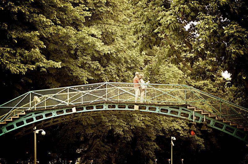 Arch bridge against trees