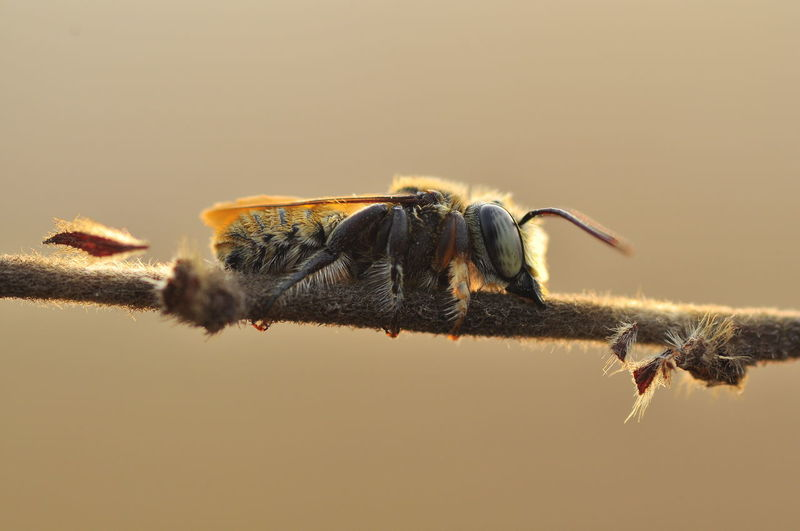 Close-up of bee against blurred background