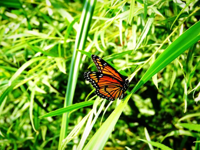 Close-up of butterfly pollinating on grass