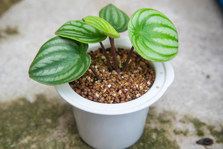 High angle view of small potted plant