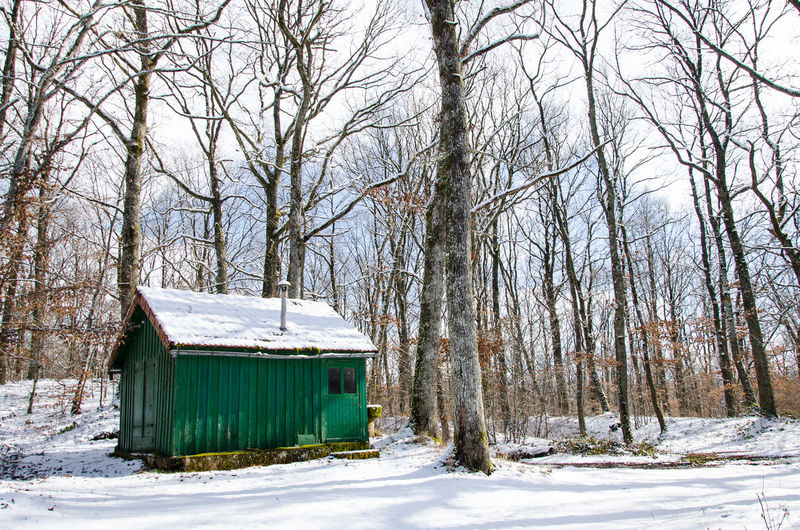 Snow Winter Cold Temperature Tree Nature Plant Land Bare Tree No People Architecture Forest Day Environment Built Structure Scenics - Nature Non-urban Scene Tranquility Building Exterior Outdoors WoodLand Extreme Weather Snowing Hut Woods Country House Exterior Building Countryside Weather Condition Frost
