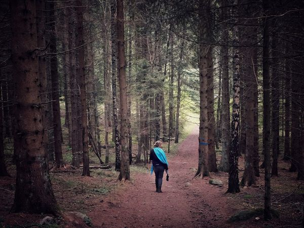 Walk in the woods Forest Tree Full Length One Person Pine Tree WoodLand Pinaceae Tree Trunk Adventure Nature Hiking Adult Beauty In Nature Outdoors Scenics Healthy Lifestyle One Man Only People Day