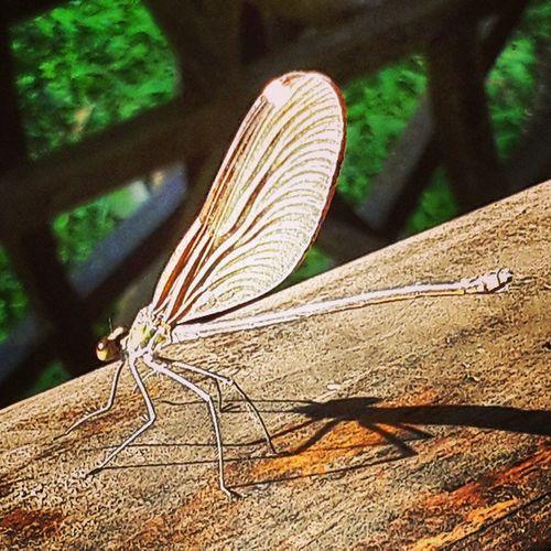 Really nice place...B'cos of Dragonfly 蜻蜓 张家界 黄龙洞