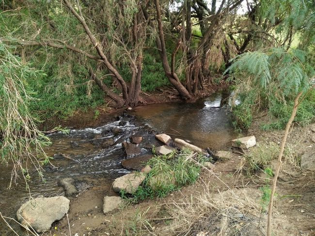 Nature Outdoors No People Water Day Animals In The Wild Tree Reptile Animal Themes One Animal Forest Beauty In Nature Stream Creek Australia Natural Beauty Water Fall Waterscape Water Reflections