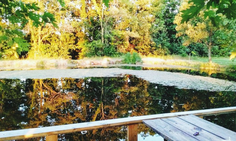 Outdoors Summer Days Trees And Nature Reflections In The Water Pond Life Pond Water Pond Collection Pond View Serene, Tranquil, Relaxed, Unruffled, Unperturbed, Unflustered, Untroubled Fishing Spot Pond Side Beauty In Nature No People EyeEmNewHere Be. Ready.