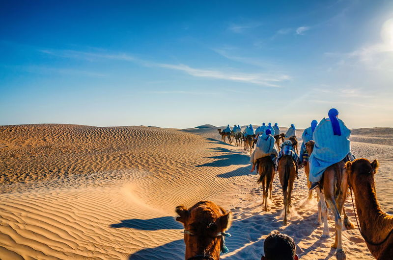 Rear view of people riding camels at desert