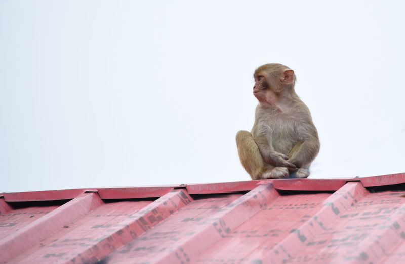one baby monkey