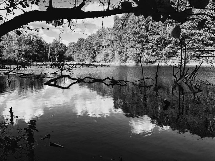Autumn Collection Blackandwhite Photography Bnw_captures Bnw_collection Water Tree Reflection Nature Lake Plant Day Beauty In Nature Tranquility