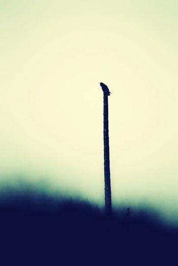 Deceptively Simple Bird Raven Crow Dark Green Forest Moody Nature Wildlife First Eyeem Photo
