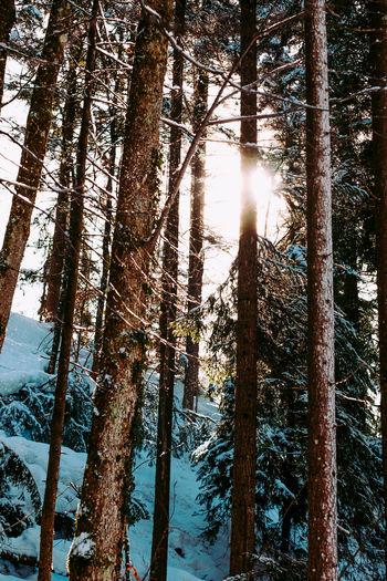Beautiful Winter Walk at the Frozen Hechtsee Lake in tyrol Austria. Tyrol Tyrol-Austria Mountain Alps Winter Snow Peak Snowcapped Tree Forest Lake Hechtsee Frozen Frozen Lake Woods Daytime Blue Sky Path Sun