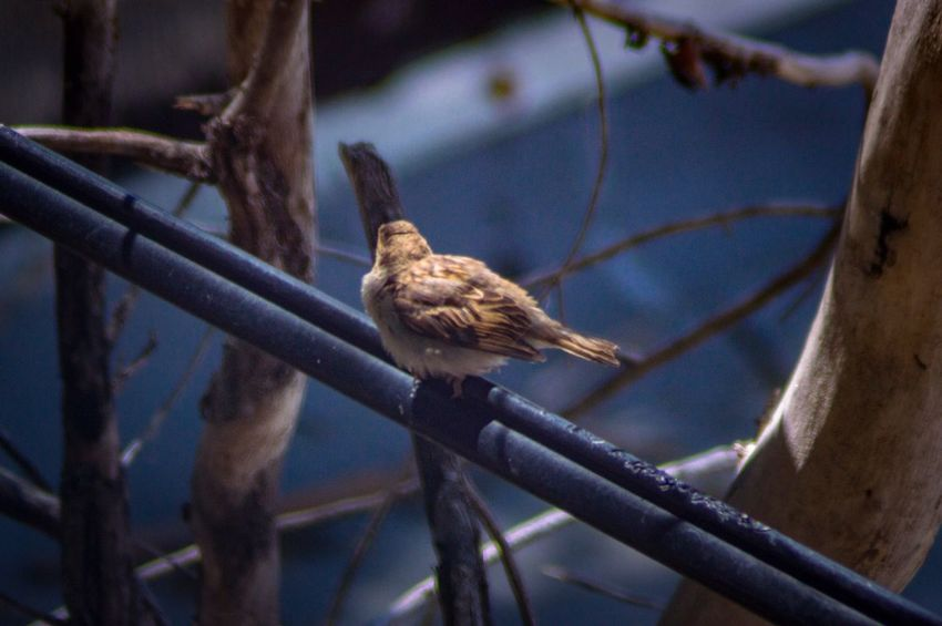 Bird on a power line Perched Bird Powerline Spring Day Background Blur EyeEm Selects Animal Wildlife Animal Animals In The Wild Animal Themes Vertebrate One Animal Perching Bird Branch Tree Close-up Selective Focus Focus On Foreground Nature