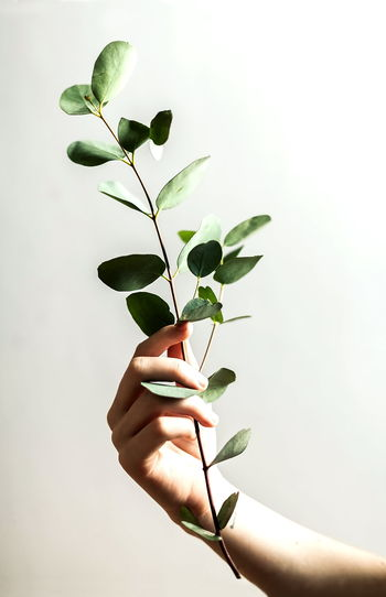 Close-up of hand holding small plant over white background