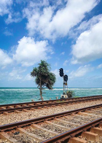 Railroad and lone tree by the Laccadive sea Sea Railroad Train Tree Colombo Laccadive Water Sri Lanka