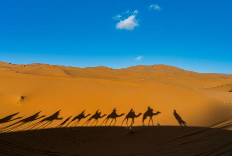 Journey ii sahara desert-morocco