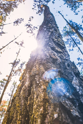 Good life😎 Day Low Angle View Outdoors Sunlight Nature No People Tree Sky Beauty In Nature Nature Tonechaser_ Worldwide_shot Worldcaptures Tonesbox Tonekillers Beautifulearth Beautiful Place