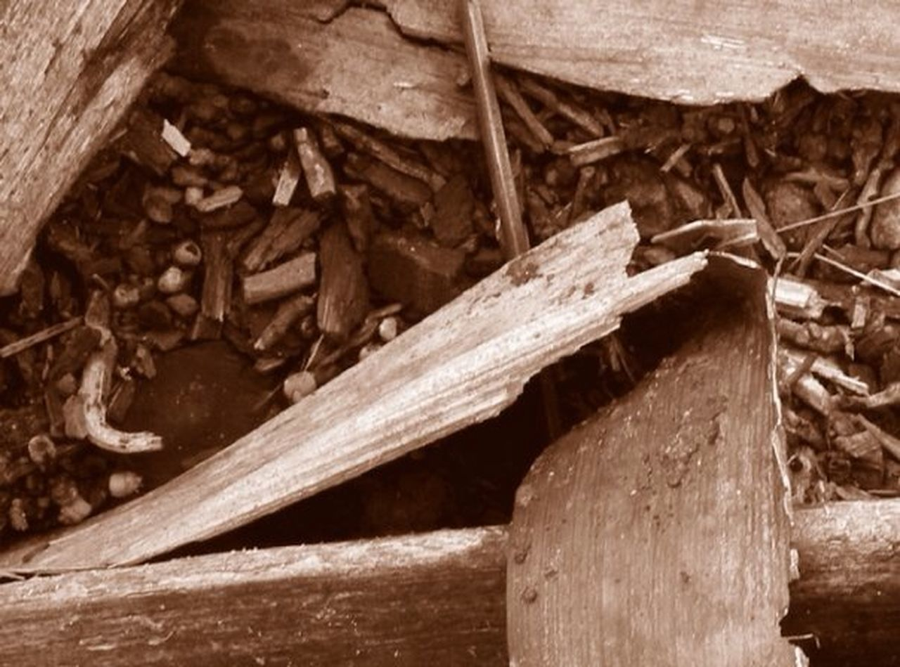 wood - material, one animal, no people, animal wildlife, tree trunk, close-up, animal themes, day, nature, reptile, outdoors