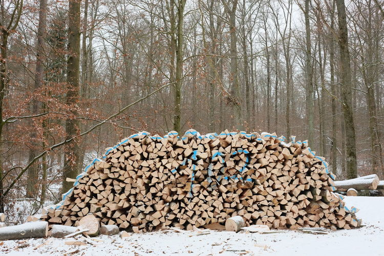 stack of fresh cut firewood in a winter forest Forestry Wintertime Beech Energy Forest Forestry Industry Fresh Firewood Hardwood Floor Heap Heating Hornbeam Nature Stack Stacked Tree Woodpile