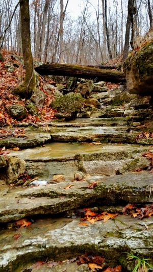 Taking Photos Enjoying Life Enjoying Nature Nature Landscape Trees Autumn Colors Woods Forest Forest Floor A Walk In The Woods Creeks Water Fall Beauty Fall Leaves Autumn Trees Fall Colors Autumn Leaves Fall Water And Stones Waterfall Rocks Hillside Enjoying Life