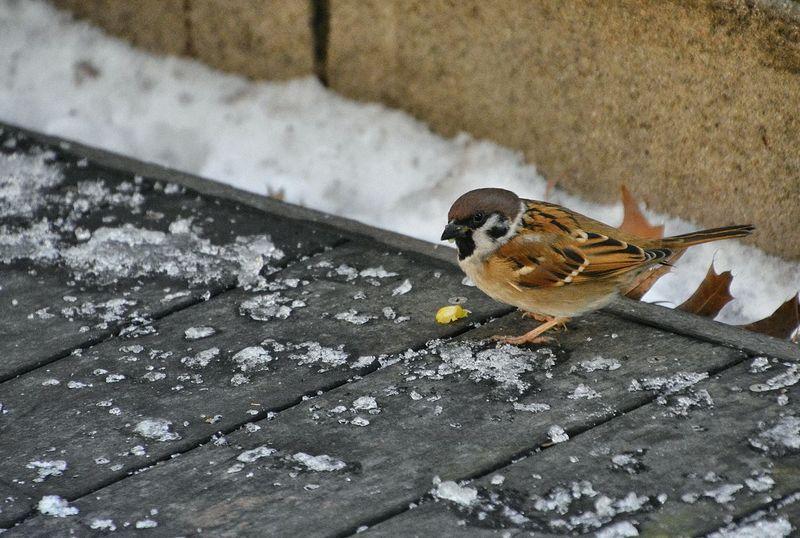 Animal Themes Birdies On My Balcony Birds Close-up Ground No People One Animal Seoul Seoul_korea Wildlife Winter Bird Wintertime