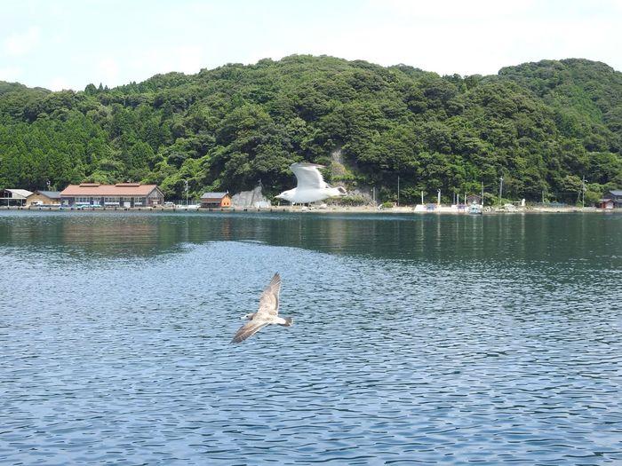 Inecho Kyoto,japan Gulls And Sea Nature Tourism