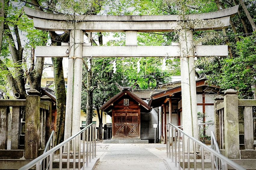 Japanese Traditional Japanese Style Built Structure Architecture Railing No People Day Indoors  Tree Japanese Architecture Japanese Temple
