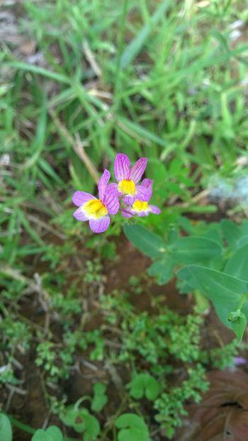 Macro Macro_collection Nokia Lumia 930 Nokiaphography Beautiful Nature Nature_perfection Macro Photography Macrophotography Macro_flower Nature_collection