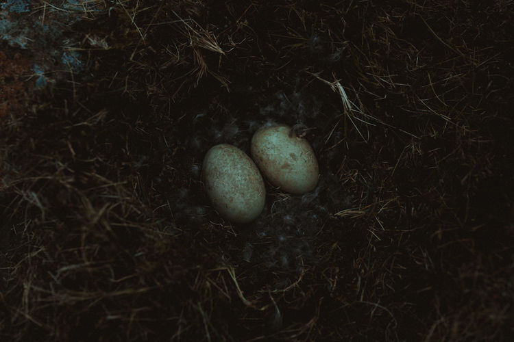 High angle view of eggs on field