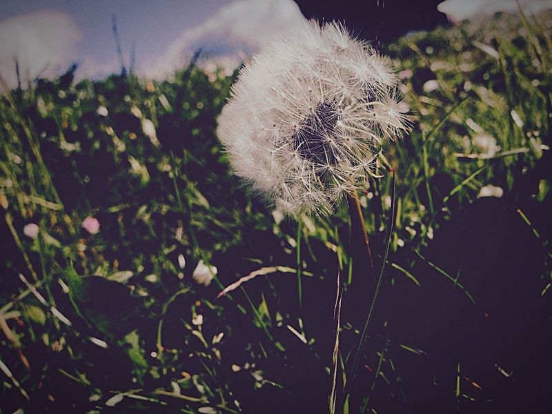 Wish Dandelion Dream 'some people see weeds I see wishes' Taking Photos Enjoying Life Outdoors