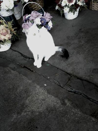 Cute Cat.  Flowershop Cat Eyes