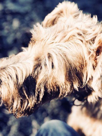 Close-up of dog outdoors