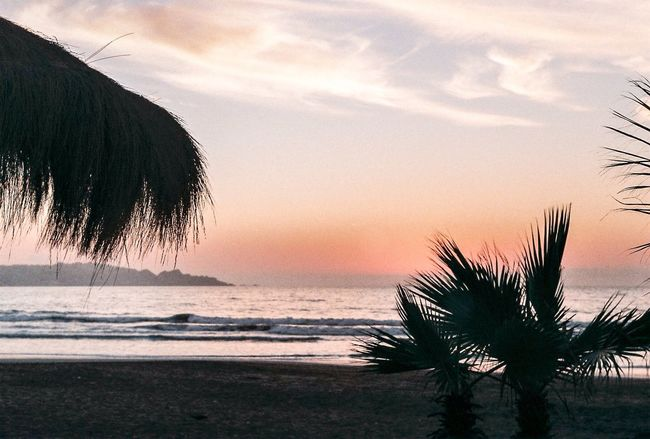 Sunset at the beach, camera: zenit 12xp Zenit Zenit12xp Sunset Sea Horizon Over Water Palm Tree Beach Water Silhouette Sky Nature Outdoors Outside Filmcamera Film Photography 35mm Film Hanging Out Film