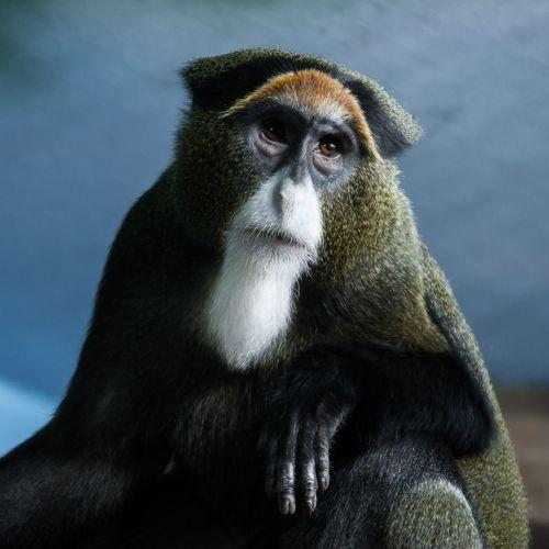 Философ Animals Animal Themes Nikonphotography Nikon Monkey Nikond90 Nikkor24-85f2.8-4
