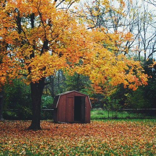 Igersindy Igersindiana Justgoshoot Autumn Fall Leaves Nature Natureaddicts Naturelovers Justgoshoot Vscocam FallintoIndiana