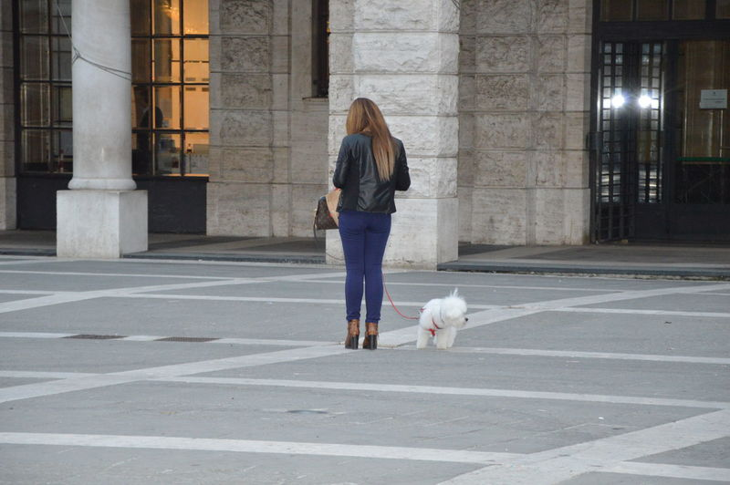 Rear view of woman with dog walking in city