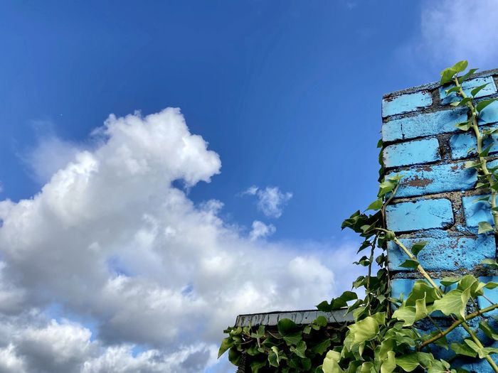 Low angle view of ivy against blue sky