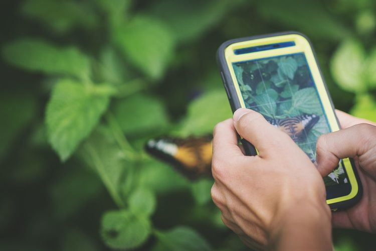 Cropped image of person photographing butterfly through smart phone