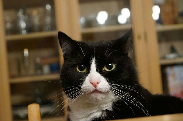 My cat Oreo! #blackandwhite #photography #Alpha58 #sony Sonya58 Pets One Animal Domestic Animals Domestic Cat Indoors  Animal Themes Animal Black Color No People Day EyeEmNewHere