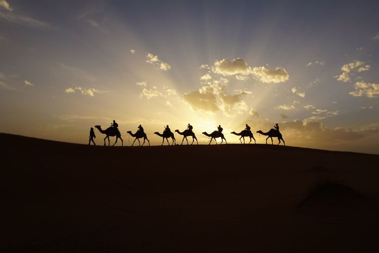 Sahara desert Sky Silhouette Sunset Real People Cloud - Sky Lifestyles Men Outdoors Nature Beauty In Nature Large Group Of People Togetherness Day