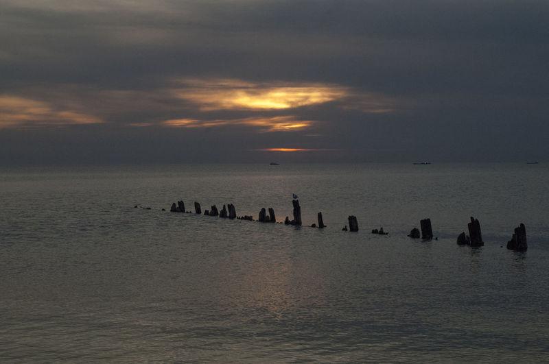 коса Ейская. маленькие стражники Море Чайки ейск косаейская Sea Закат коса таганрогский залив птицы