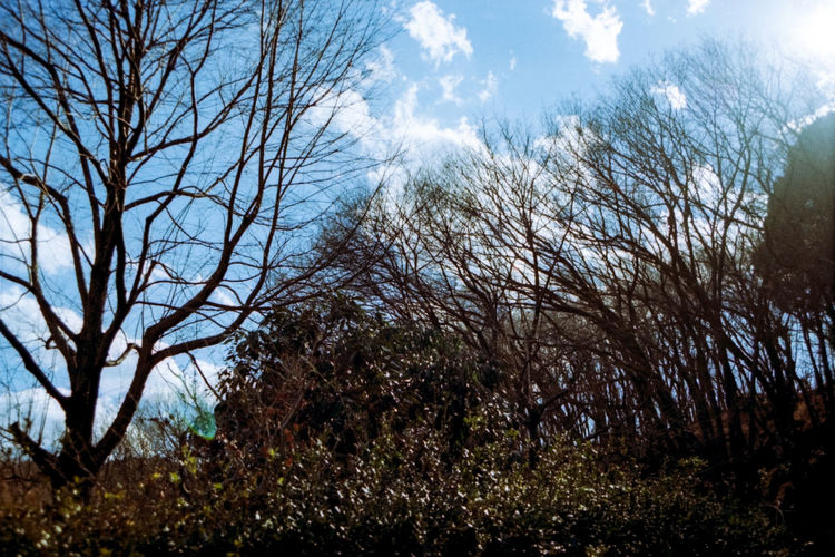Film Photography Day No People Outdoors Sunlight Shining Nature Tree Beauty In Nature Green Color Forest Filtered Image Photoshop Blue Solar Flare Sunbeam Sky Lens Flare Machida Yakushiike 薬師池公園