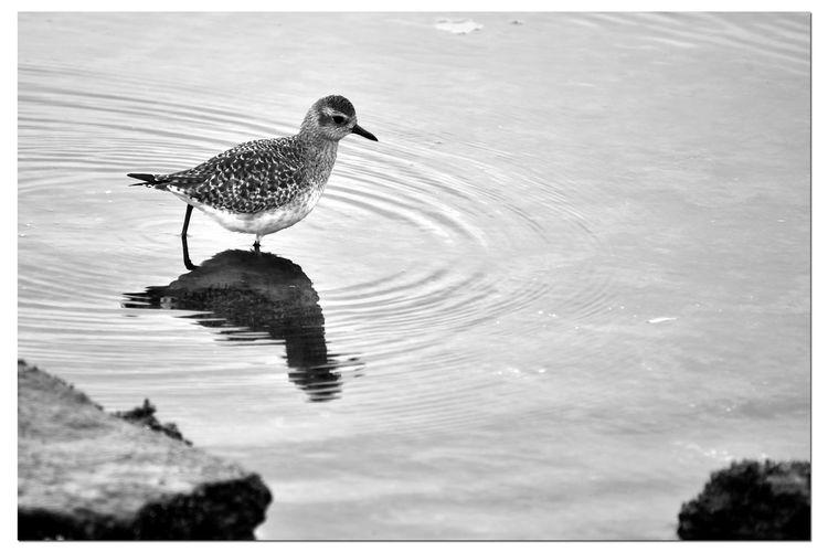 Seagull on a lake